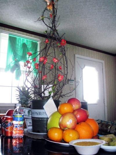 Hoa đào đón tết của người Việt ở Mỹ