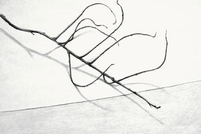 """Ðan Nguyễn gửi tặng bức vẽ """"The Poetry of Sticks"""" của cô - Nữ sinh gốc Việt được IREM chọn làm 'Sinh Viên Của Năm'"""