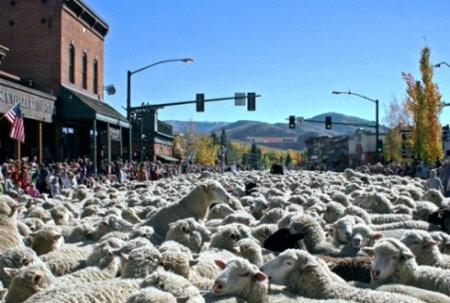 Lễ hội diễu hành của những chú cừu